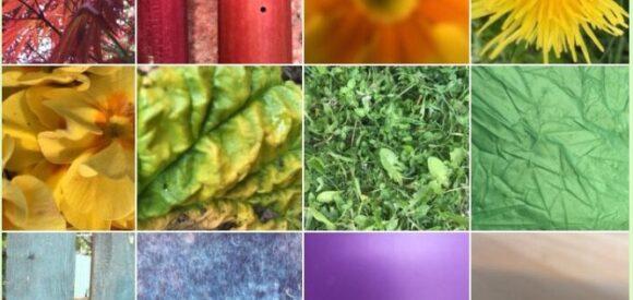 Rainbow Feeds